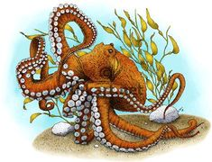 Giant Pacific Octopus - Stock Art Illustration