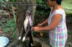 Jackie Downes  Dogs are skinned alive in Asia
