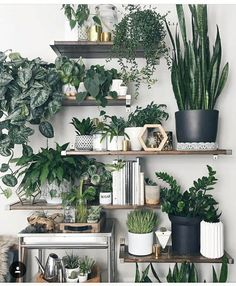 » plant life » indoor houseplants » boho decor » jungalow » cacti & succulents » #gardeningindoorplants