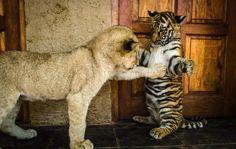 (1) La Passion & L'Amour Des Animaux