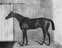 Macaroni a bay racehorse in a stable by Harry Hall