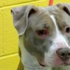Manhatten NY.  Hazel.  Female.  2 years.  Dies in a.m.  See Urgent Part 2 on fb.***RESCUED***