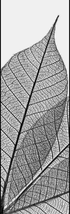black and white leaves as aesthetic for website Leaf Skeleton, Geometric Nature, Artist Pencils, Natural Structures, Art Drawings, Skeleton Drawings, Dry Leaf, Sketch Inspiration, Video Games For Kids