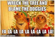 Cats fa la la la