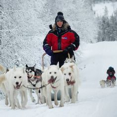 Our huskies on the 20 km ride Ruka Finland. Photo: Petri Jalonen