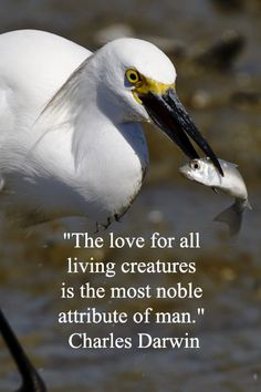 The love for all living creatures is the most noble attribute of man.  Charles Darwin