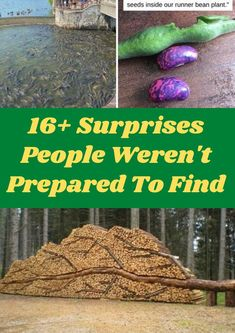 16+ Surprises People Weren't Prepared To Find Life is full of little surprises. Some might lead to a bigger mystery while others basically amount to a jump scare. In any case, these things are unexpected — that's what makes them surprises, after all. It's time to delve into the world of stuff that's surprised other people, which in turn might just surprise you. Matching Christmas Pjs, Family Christmas, Christmas Gifts, Christmas Decorations, Funny Animal Videos, Funny Animal Pictures, Funny Images, Blonde Highlights Curly Hair, Asian Wedding Dress