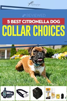 For stubborn dogs that don't respond to traditional training methods, anti-bark collars may be necessary. Here are the best citronella dog collar choices. Bark Collars For Dogs, Pet Collars, Citronella Bark Collar, Anti Bark Collar, Dog Couch, Medication For Dogs, Stop Dog Barking, Dog Ages