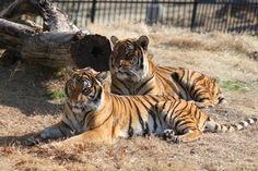 Photo by Dr. Jen Kilburn, Tulsa Zoo.