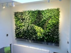 Greenery Imports Artificial Plants. We are Australia's Largest Importer of quality Artificial Plants and deliver Australia Wide. Buy online and save.