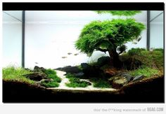 Freshwater Aquascaping...don't think I would do this, but still really cool!
