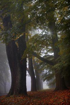 ✯ Autumn Through The Fog, Blue Mountains, Australia