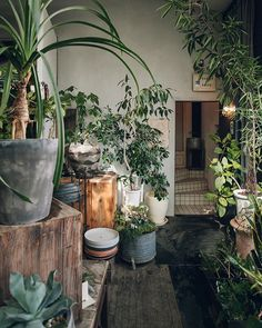 45 Amazing Greeny Indoor Garden Style Decor Design Ideas – Home Decor Ideas Indoor Garden, Indoor Plants, Home And Garden, Tropical Greenhouses, Japanese Tea House, Concrete Interiors, Pot Plante, Interior Plants, Exotic Plants