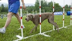 There are so many popular dog training methods out there that it can be frustrating to find out which is which and what method is going to be best for both your dog and you as an owner. Dog Training Methods, Dog Training Classes, Dog Training Techniques, Training Your Puppy, Brain Training, Training Online, Pitbull, Dog Minding, Easiest Dogs To Train
