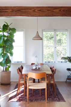 oversized green plant in a cozy dining room