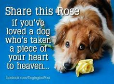 Memories of Jess who took a piece of my heart to Heaven with her - darling dog is there with all dogs who went before her