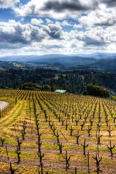 Anderson Valley and some winery suggestions..