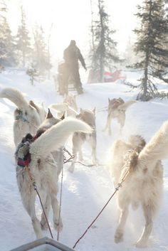 Dog-sled safari in O