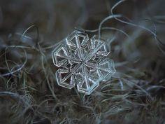 A bela fotografia macro de flocos de neve de Alexey Kljatov