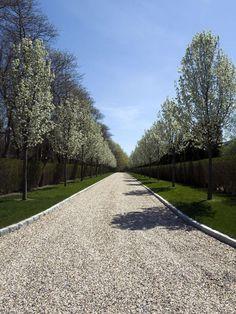 Tree-Lined Entryway : Landscaping | Barry Block : Garden Galleries : HGTV - Home & Garden Television