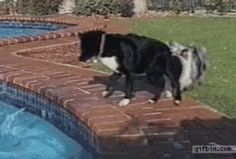 Dogs Use Teamwork To Get Ball Out Of The Pool