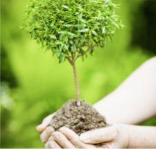 UDI spendet den Baum, die Initiative PrimaKlima pflanzt ihn.