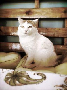 El gato Ruperto