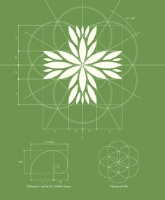 The use of light line weights makes this design sing. Czech Medical Herbs logo design by Jan Zabransky. Design Graphique, Art Graphique, Herbs Image, Type Logo, Logo Luxury, Inspiration Logo Design, Medical Logo, Corporate Design, Cool Logo