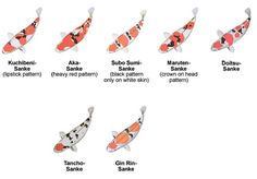Different types of koi chart koi ponds pinterest koi for Types of koi fish and meanings