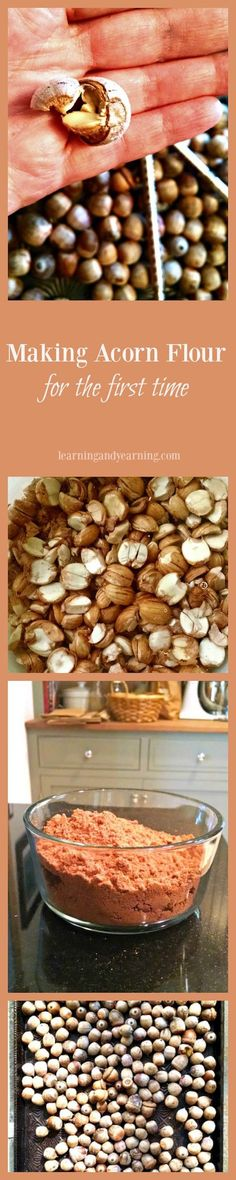Acorns, like all nuts, are nutritious. Not only that, I've discovered that they are delicious. Here's how I turned a few quarts of them into acorn flour.: