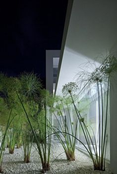 plant, houses, kedem architect, ramat hasharon, outdoor gardens