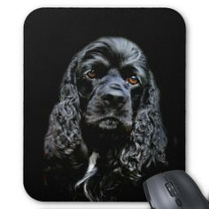 >>>The best place          	Black Cocker Spaniel Mouse Pads           	Black Cocker Spaniel Mouse Pads Yes I can say you are on right site we just collected best shopping store that haveThis Deals          	Black Cocker Spaniel Mouse Pads today easy to Shops & Purchase Online - transferred dir...Cleck Hot Deals >>> http://www.zazzle.com/black_cocker_spaniel_mouse_pads-144446505528937644?rf=238627982471231924&zbar=1&tc=terrest
