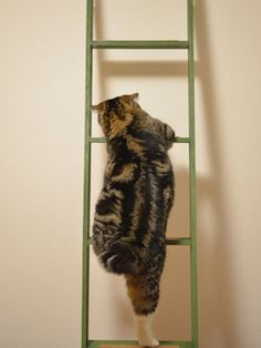 my cat climbed the ladder when I was painting my living room then sat on the shelf attached to the ladder...hilarious...