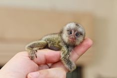 Here's our list of some of the world's smallest mammals.