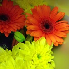 Orange is such a beautiful contrast with the yellow! #flowersireland #flowers