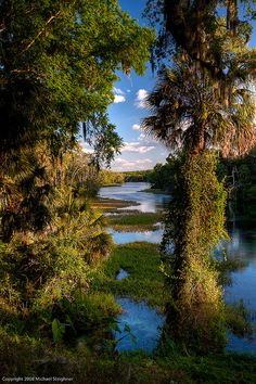 wetlands, Rainbow Springs, central Florida. #AmericaBound  @Earthbound Farm