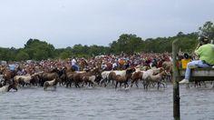 Chincoteague Pony Swim 2004