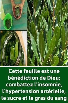 This leaf is a blessing of God: fight insomnia, high blood pressure, sugar and blood fat , Home Remedies, Natural Remedies, Healthy Salt, Physical Inactivity, High Blood Pressure, Stop Eating, A Blessing, Fett, Health Tips