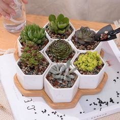 8pcs/set Decorative Geometry White Ceramic Flowerpot Succulent Plant Pot Bonsai Planter Porcelain Pot Garden Supplies Home Decor