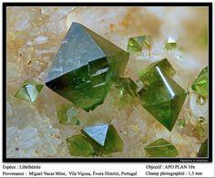 Libethenite,  Cu2(PO4)(OH) , Miguel Vacas Mine, Vila Viçosa, Portugal. Fov 1.5 mm. Copyright: Frédéric Hède (Gluon)