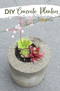 * How to Make Concrete Planters