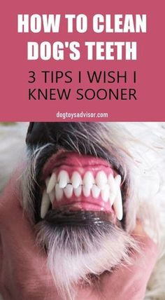 Do you see a lot of tartar on your dogs teeth? More than 80 of dogs by age 3 have dental disease caused by plaque buildup. Here are 3 tips youd wish youd known sooner to remove tartar and clean your dogs teeth at home. Dog Health Tips, Pet Health, Dog Care Tips, Pet Care, Pet Tips, Donut Party, Frozen Dog Treats, Puppies Tips, Dental