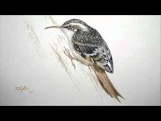 Waldbaumläufer, der Spiralenkletterer - Certhia familiaris - YouTube