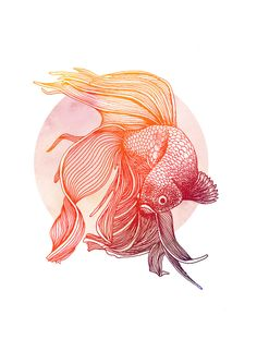 Red Siamese Fighting Fish Print from ink drawing & watercolour original - A3 by Dariofisher on Etsy https://www.etsy.com/uk/listing/483829951/red-siamese-fighting-fish-print-from-ink