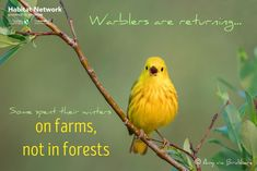 Seeing and hearing warblers is a sure sign of spring. The more we learn about bird migration, the more we wonder. Some warblers appear to prefer farms over forests for their wintering habitat. Which may lead us to ask, do farms provide safe habitat for birds? See Habitat Network for ideas of how to garden without using pesticides to provide safer habitat for all wildlife: http://content.yardmap.org/learn/insecticides/