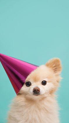 Cute Puppy Dog Pet iPhone 5s wallpaper iPhone SE