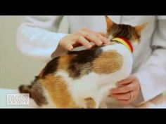 Advice on microchipping your pet from the Michigan Humane Society Pet Care Tips, Humane Society, Michigan, Corgi, Cute Animals, Advice, Pets, Youtube, Pretty Animals