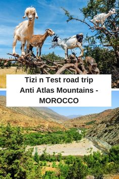 A road trip in Morocco driving over the Tizi n Test pass through the Anti Atlas Mountains, including stopping at the famous Tin Mal Mosque and ending in the ancient city of Taroudant. We travelled with Wild Morocco tour company.