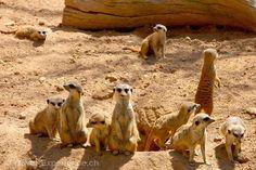 Valencia zeigt ein Stück Afrika  Zoos mag man, oder eben nicht – doch wer Kinder hat, für den ist der Bioparc in Valencia ein Muss. Freuen Sie sich auf einen tierisch guten Tag!