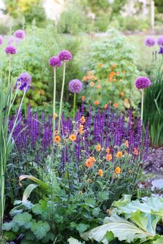 Rosy-orange 'Totally Tangerine' geum (Geum, zones 4-8, 2' tall and wide, sun/part shade) with alliums and sage